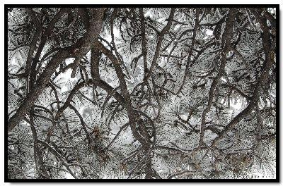 view the Image Winter Branches