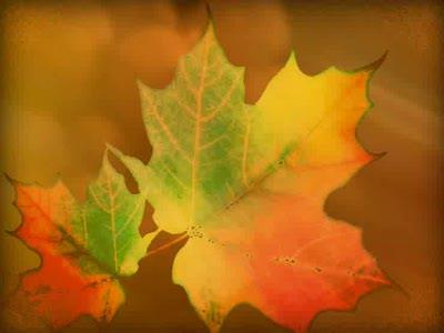 Motion Background on Fall Leaf