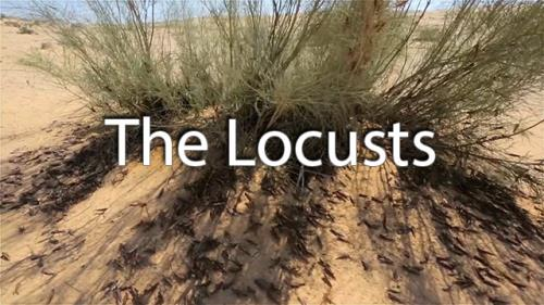 view the Video Illustration The Locusts