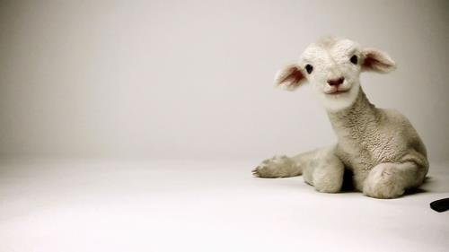 view the Video Illustration Good Friday Lamb