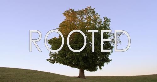 view the Video Illustration Rooted