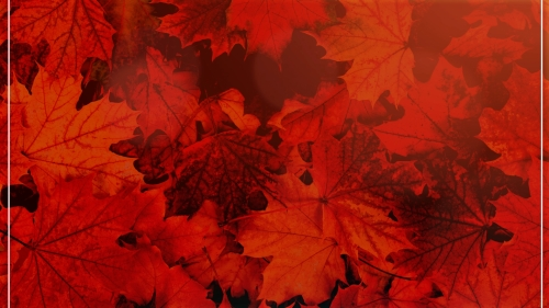 Autumn | The Changing Seasons Image