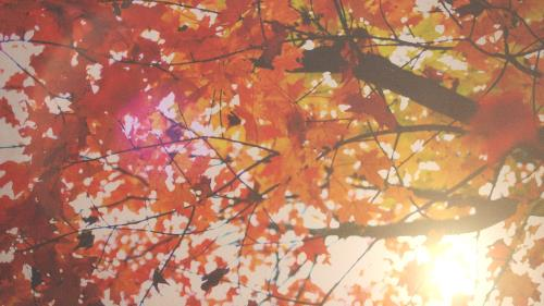 view the Motion Background Autumn Light 05