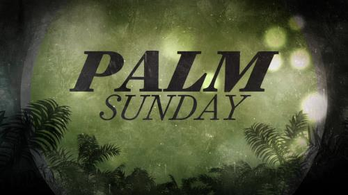 view the Motion Background Palm Bokeh Palm Sunday
