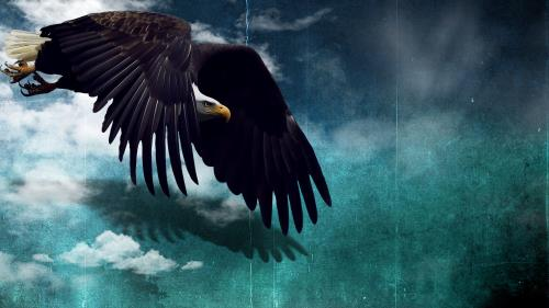 Like  Eagles PowerPoint Template 2