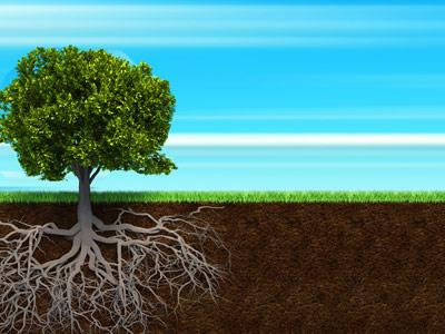 Rooted in Jesus PowerPoint Template 4