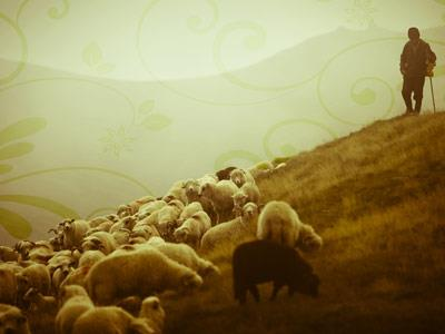 The Shepherd PowerPoint Template 2