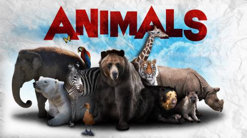 Animals PowerPoint Template 1