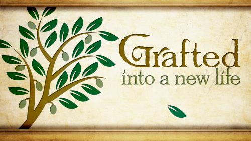 Grafted  Into  New  Life PowerPoint Template 1